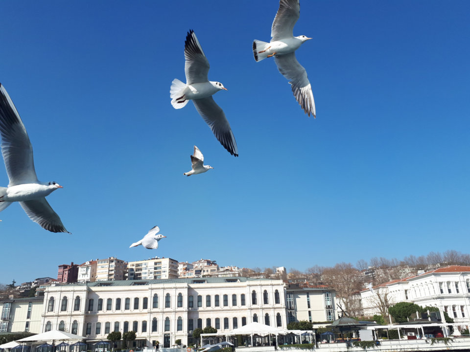 seagulls flying over the blue sky of Istanbul.